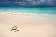 O escudo na praia branca da areia perto do azul considera no verão fotografia de stock