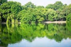 O espelho da árvore no lago Fotos de Stock Royalty Free