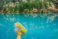 O espelho do lago Fotos de Stock Royalty Free