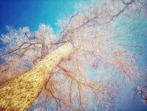 O espetáculo das árvores Foto de Stock Royalty Free