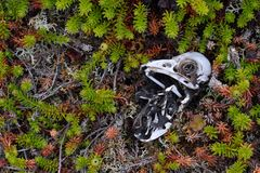 O esqueleto de um pássaro na terra foto de stock royalty free