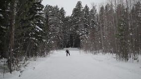 O esquiador patina nas madeiras, através das árvores video estoque
