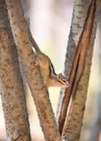 O esquilo fotografia de stock