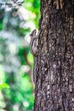 O esquilo indiano da palma fotografia de stock