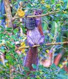 O esquilo recolhe uma porca que está vista nunca antes foto de stock