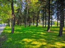 O estádio de Saputo de árvores do lado do impacto de Montreal Foto de Stock