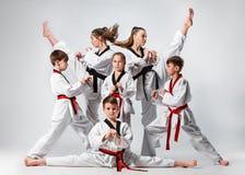 O estúdio disparou do grupo de crianças que treinam artes marciais do karaté fotografia de stock royalty free
