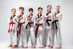 O estúdio disparou do grupo de crianças que treinam artes marciais do karaté imagem de stock royalty free