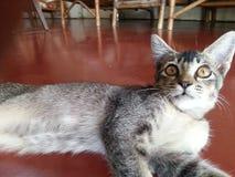 O estado do gatinho casa feliz do sono do estado fotografia de stock