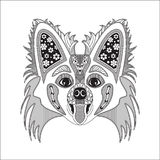 O estilo de Papillon da raça do cão é observado Fotos de Stock Royalty Free