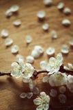 O estilo do vintage da cereja floresce o ramo no fundo rachado de madeira Foto de Stock
