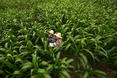 O estudante de ensino do fazendeiro aprecia junto no arquivado fotos de stock royalty free