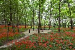 O exercício da manhã entre as flores Imagem de Stock Royalty Free