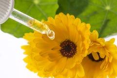 O extrato erval dos officinalis do Calendula da flor do cravo-de-defunto Fotos de Stock Royalty Free