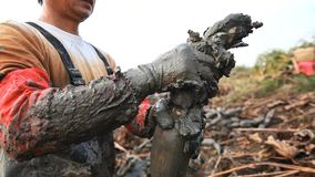 O fazendeiro for às raizes de escavação dos lótus quando a água no lago secado acima imagem de stock