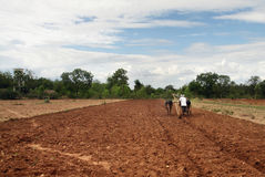 O fazendeiro ara os campos Foto de Stock Royalty Free