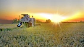 O fazendeiro colhe a colheita no por do sol video estoque