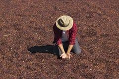 O fazendeiro com o chapéu que está no café secado, guardando o feijão de café secado, roasted o feijão de café no fundo, foco sel Fotos de Stock Royalty Free