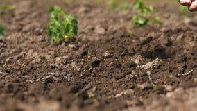 O fazendeiro com uma picareta faz um furo na terra filme