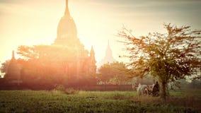 O fazendeiro conduz o carro de boi com paisagem surpreendente do por do sol em Bagan myanmar filme