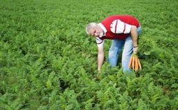 O fazendeiro da cenoura Fotos de Stock Royalty Free