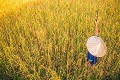 O fazendeiro da criança está colhendo o arroz foto de stock royalty free