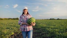 O fazendeiro da mulher leva uma melancia madura nas mãos video estoque