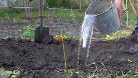 O fazendeiro derrama a água da cubeta no poço Preparação para plantar uma árvore vídeos de arquivo