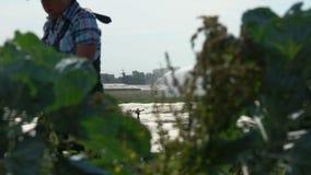 O fazendeiro está andando no campo com sistema de irrigação video estoque