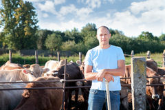 O fazendeiro está trabalhando na exploração agrícola com vacas de leiteria Imagens de Stock Royalty Free