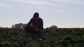 O fazendeiro examina o crescimento da colza de inverno no campo video estoque