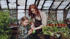 O fazendeiro fêmea e sua criança bonito estão lavando plantas verdes com bittle do pulverizador ao jardinar no pomar parenting vídeos de arquivo