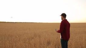 O fazendeiro guarda o controlador remoto com suas mãos quando o quadcopter voar no fundo O zangão voa afastado ao campo de trigo filme