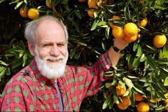 O fazendeiro idoso de sorriso mostra a fruta alaranjada Foto de Stock Royalty Free