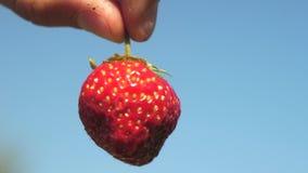 O fazendeiro mostra em suas morangos a favor do meio ambiente da mão crescidas em seu jardim O fazendeiro mostra morangos vermelh video estoque