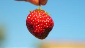 O fazendeiro mostra em suas morangos a favor do meio ambiente da m?o crescidas em seu jardim O fazendeiro mostra morangos vermelh vídeos de arquivo