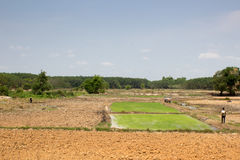 O fazendeiro prepara-se para plantar o arroz no campo Foto de Stock Royalty Free