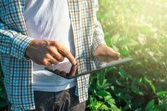 O fazendeiro que usa o tablet pc digital no feijão de soja cultivado colhe imagens de stock royalty free