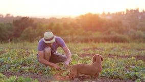 O fazendeiro verifica ambos como o abobrinha crescente no campo da exploração agrícola orgânica do eco filme
