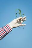O fazendeiro verifica o milho Imagens de Stock