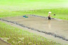 O fazendeiro vietnamiano trabalha no campo do arroz Ninh Binh, Vietnam Imagens de Stock Royalty Free