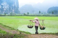 O fazendeiro vietnamiano trabalha no campo do arroz Ninh Binh, Vietnam Fotografia de Stock