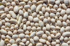 O feijão seco semeia a textura Fotos de Stock Royalty Free
