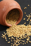 O feno-grego é usado como uma erva e como uma especiaria Fotografia de Stock Royalty Free