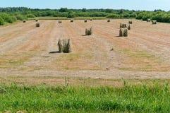 O feno torcido no campo, pacotes de feno rola na terra fotos de stock royalty free