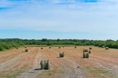 O feno torcido no campo, pacotes de feno rola na terra fotografia de stock