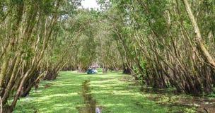O ferryman toma o viajante em uma excursão do barco ao longo dos canais na floresta dos manguezais fotos de stock