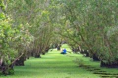 O ferryman toma o viajante em uma excursão do barco ao longo dos canais na floresta dos manguezais foto de stock