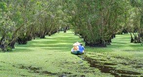 O ferryman toma o viajante em uma excursão do barco ao longo dos canais na floresta dos manguezais imagens de stock royalty free