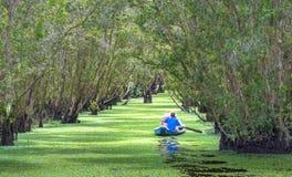 O ferryman toma o viajante em uma excursão do barco ao longo dos canais na floresta dos manguezais fotografia de stock